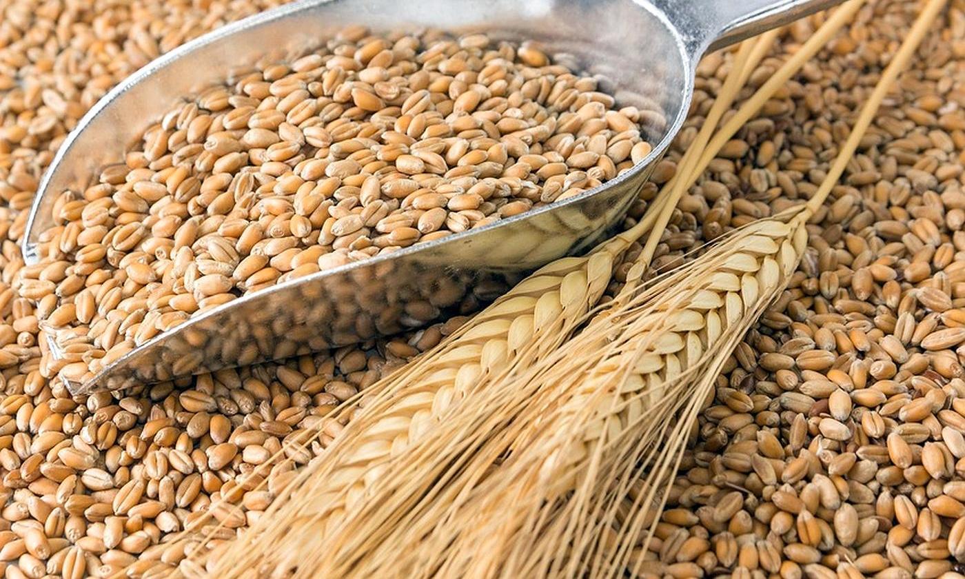 Министерство экономического развития согласовало проект постановления о временной квоте на экспорт зерна