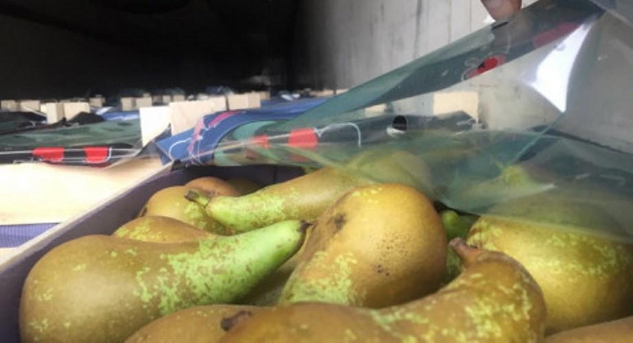 Россельхознадзор временно запретил ввоз груш из Гродненской области