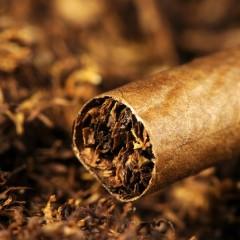Табак и табачное сырье могут войти в перечень подкарантинной продукции в ЕАЭС