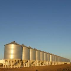 На экспорт зерна из России могут установить квоту в 20 млн. тонн