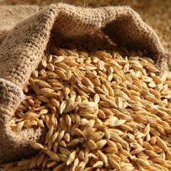 Правительство одобрило экспортные квоты на зерно в размере 7 млн. тонн