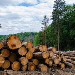В Архангельской области лесовоз разрушил мост через реку Суланда