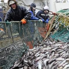 В Хабаровском крае могут создать логистический центр для хранения рыбы