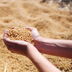 Китай разрешил импорт сои из всех регионов России