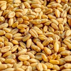 Низкий спрос на зерно вынудил экспортные терминалы начать снижать ставки на его перевалку