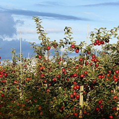 В Краснодарском крае открыли плодохранилище мощностью 10 тыс. тонн