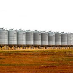 В Саратовской области появится три новых зерновых хаба